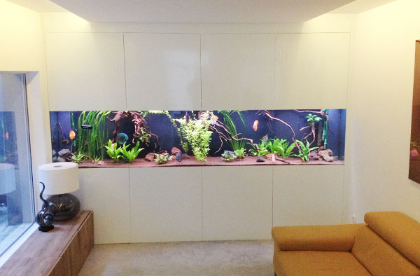 aquarium neon vissen planten inrichting van uw aquarium. Black Bedroom Furniture Sets. Home Design Ideas