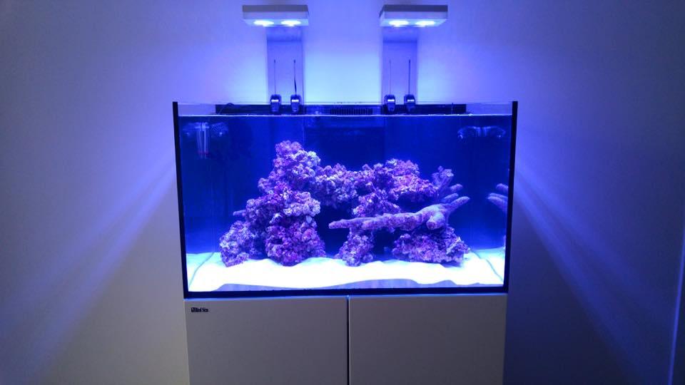 aquarium neon vissen planten alles voor uw aquarium. Black Bedroom Furniture Sets. Home Design Ideas