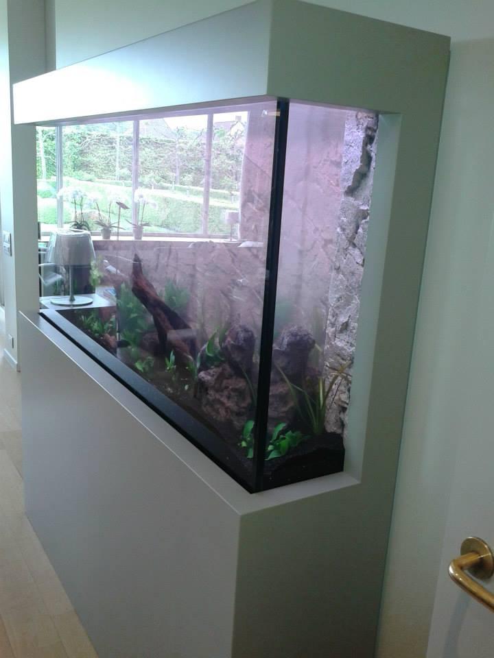 Aquarium neon vissen planten inrichting van uw aquarium - Aquarium wand ...