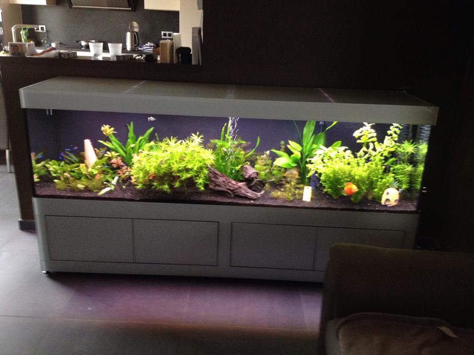 Aquarium in muur