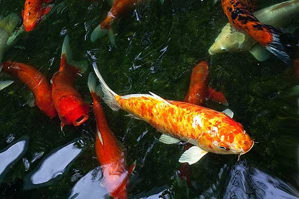 aquarium neon planten alles voor uw aquarium vijvervissen