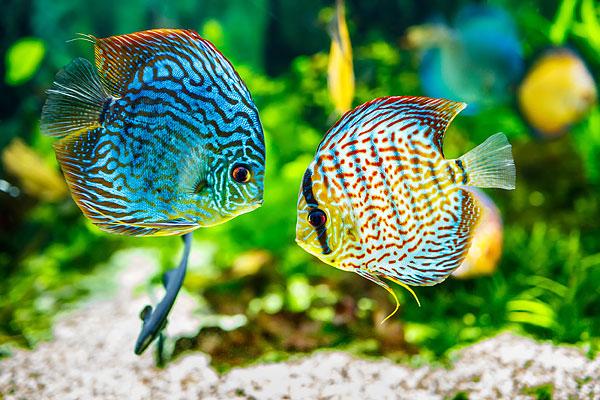 Aquarium neon planten alles voor uw aquarium for Kleine zierfische