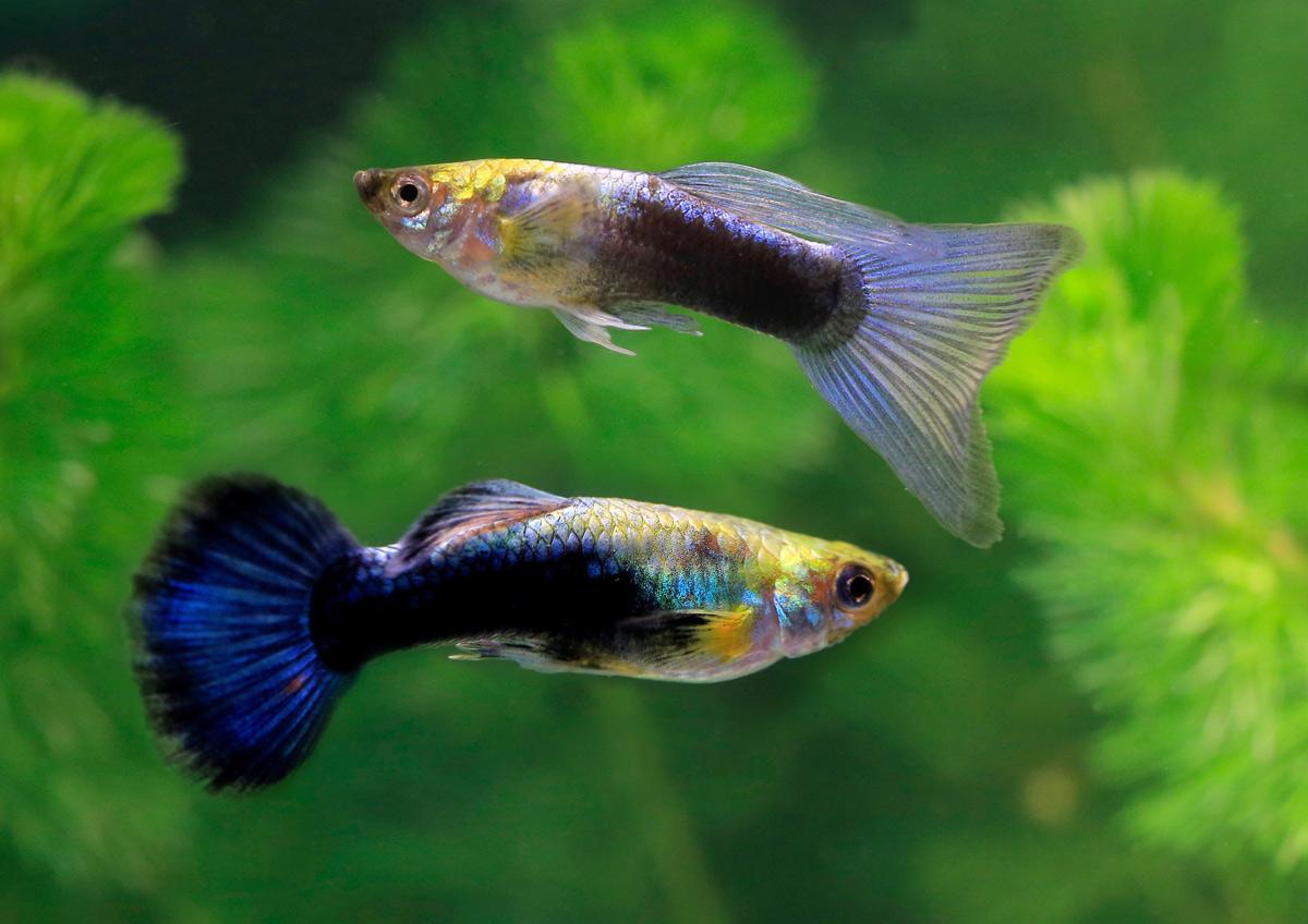 Leb-reticul-blue-neon