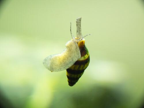 slaketende-slak
