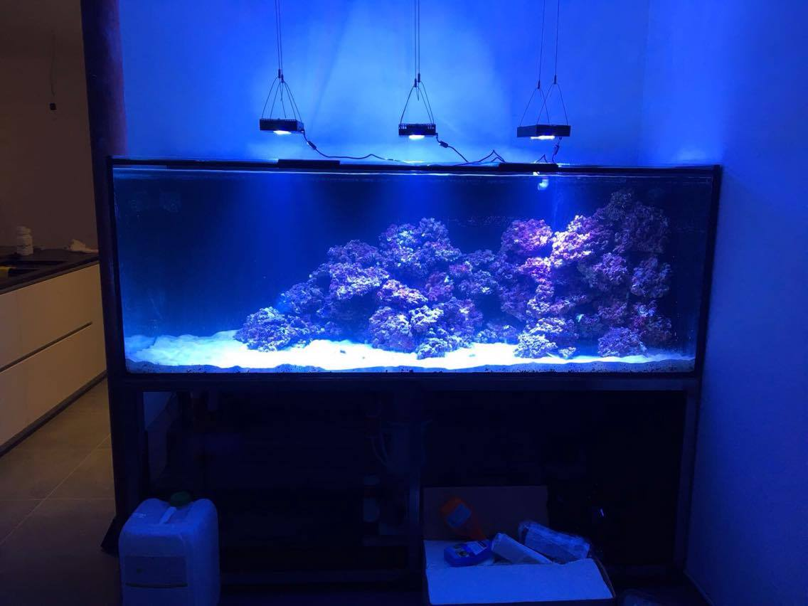 Aquarium inrichten  voorbeelden   Aquarium Neon  vissen, aquaria en toebehoren