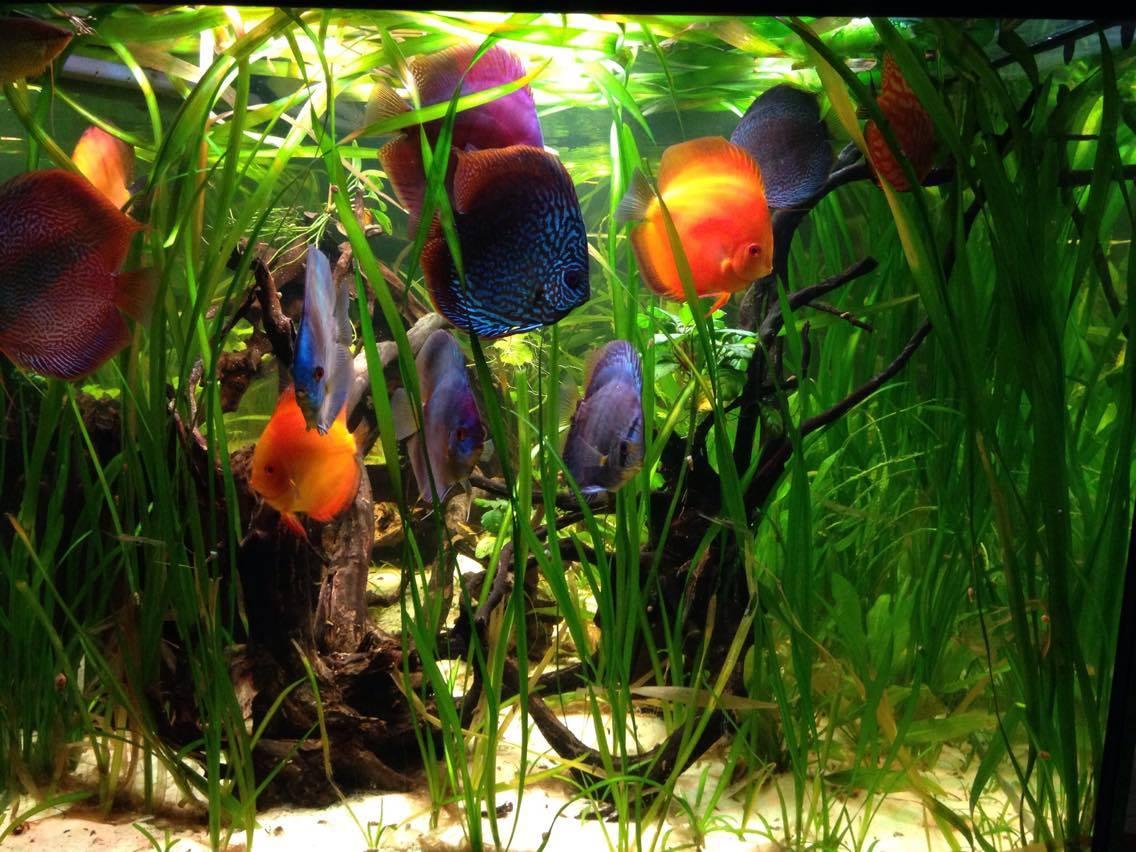Aquarium op maat bij Neon