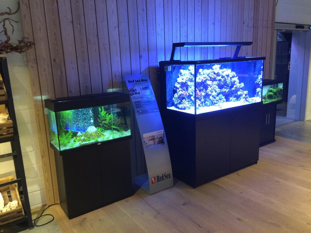 Winkel aquarium neon vissen aquaria en toebehoren for Neon aquarium