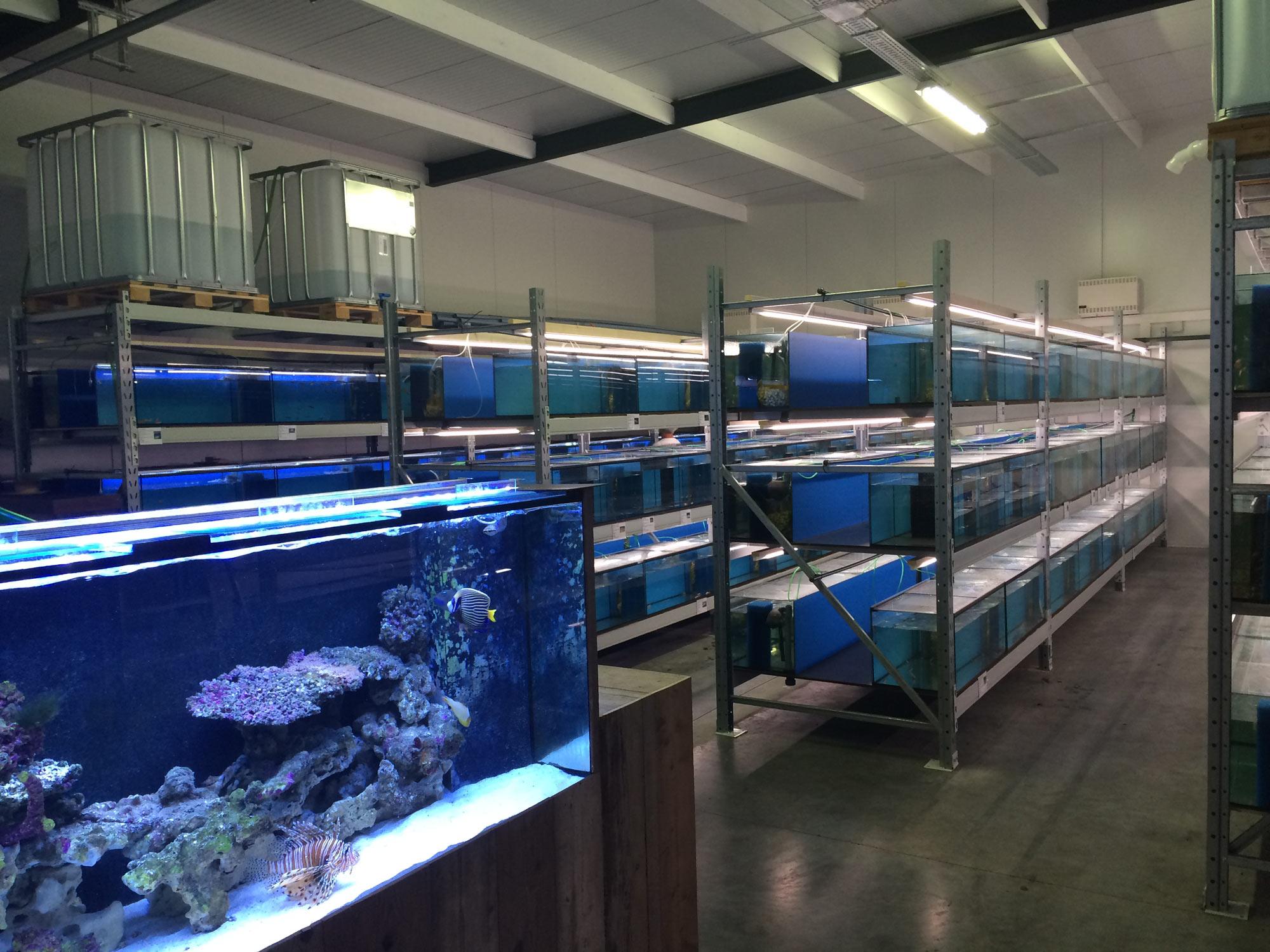 aquarium winkel