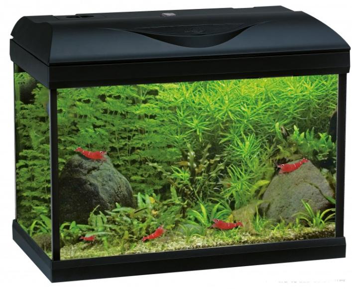 Laguna aquarium