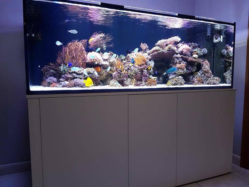 maatwerk aquarium