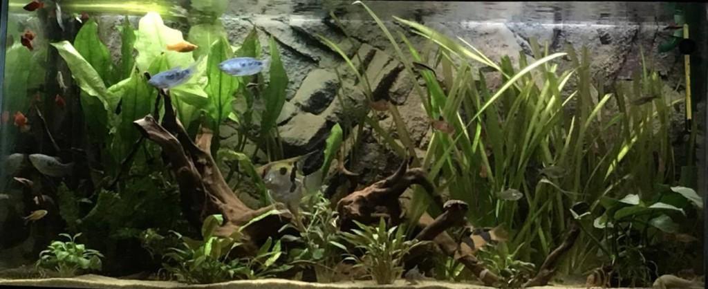 aquaria klanten - Neon