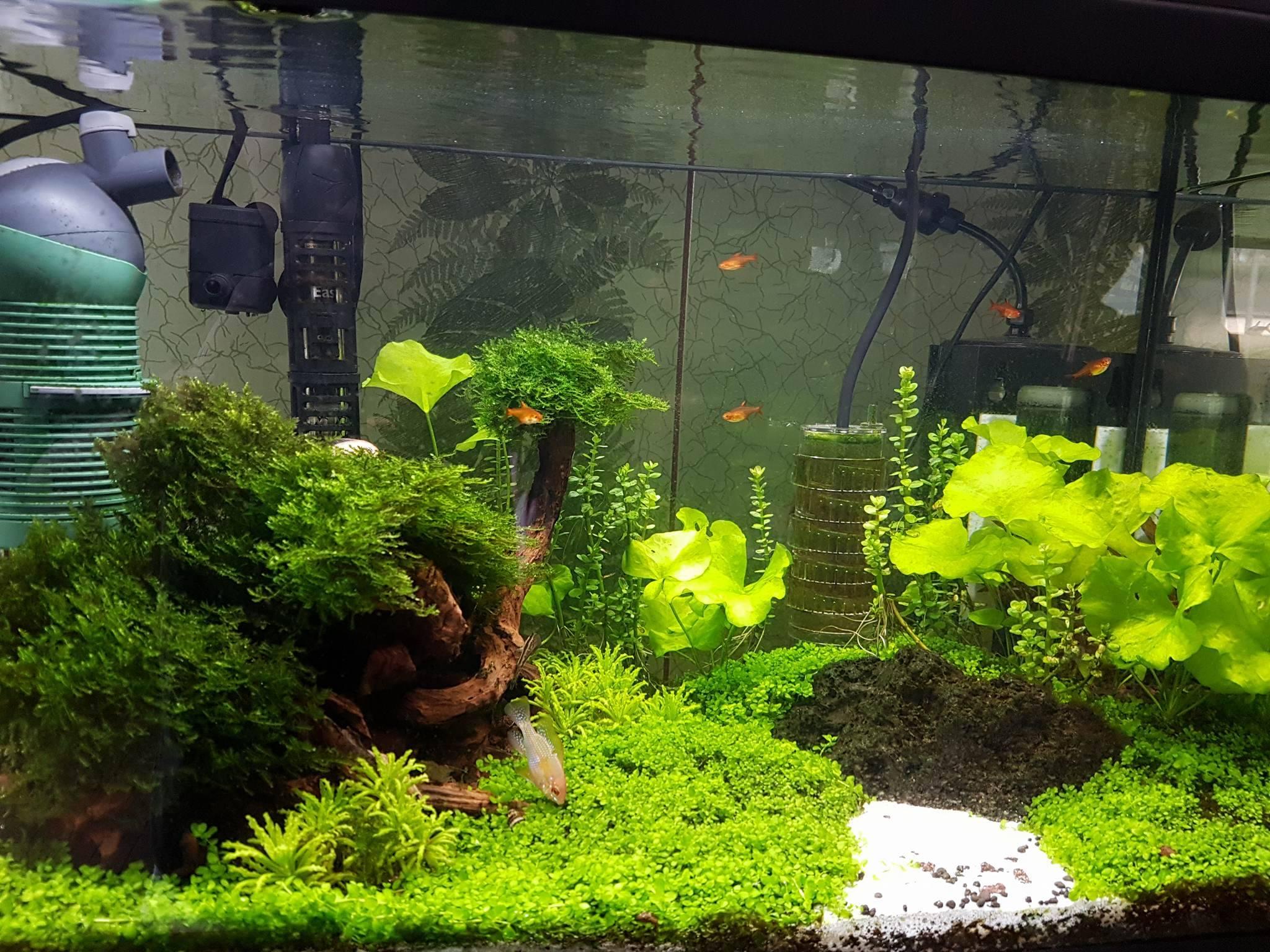 aquaria klanten