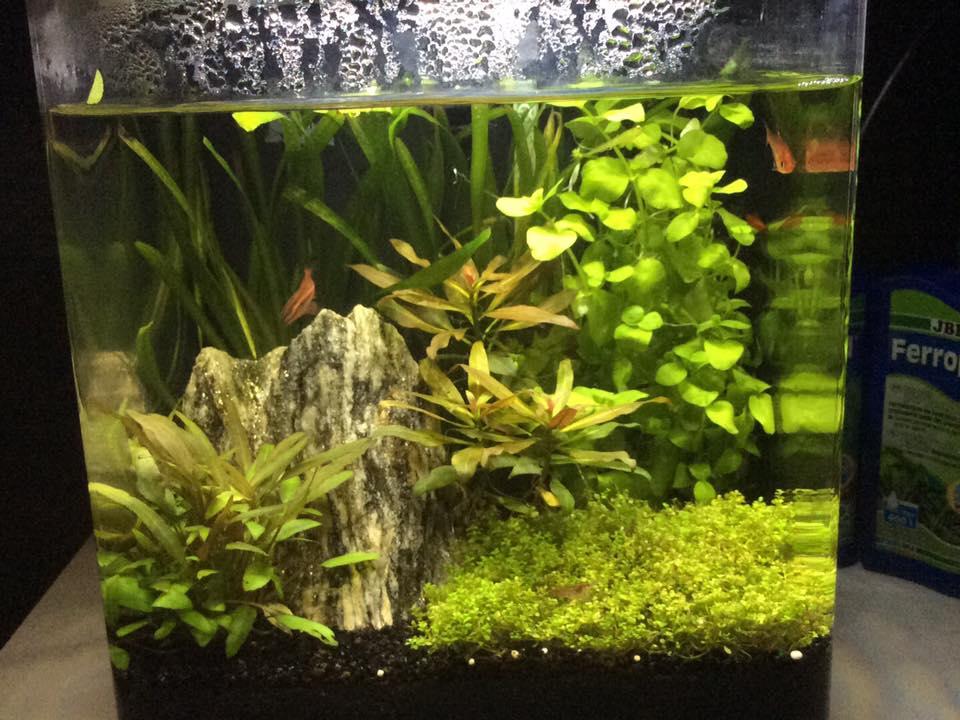 foto's aquaria klanten Neon