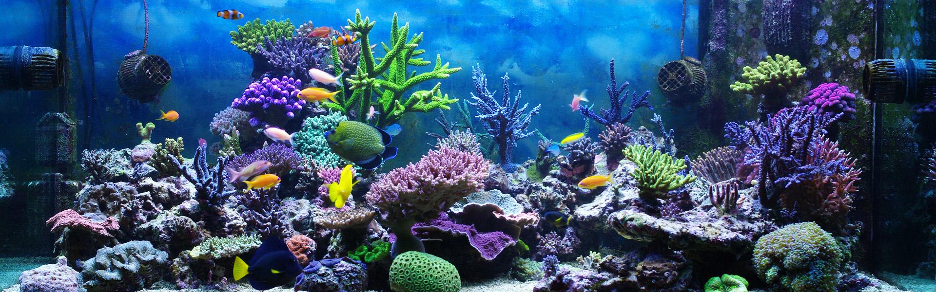 Aquarium Neon  vissen, planten, alles voor uw aquarium