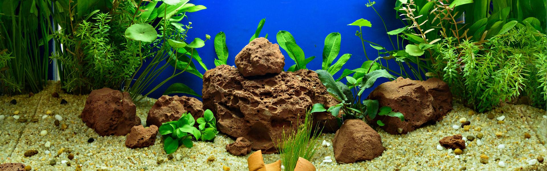 Aquarium Neon  vissen, planten, inrichting van uw aquarium