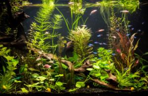promotie planten aquarium