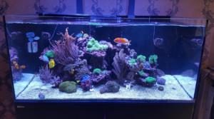 Poll mooiste aquarium - aquarium Neon
