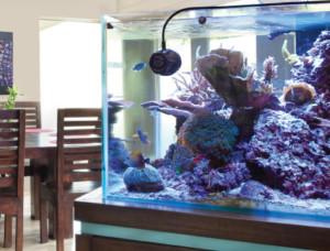 Vortech stromingspompen aquarium