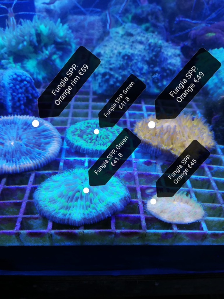 koralen