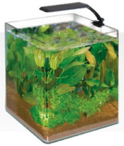 Amtra Box Cubo Orion aquarium