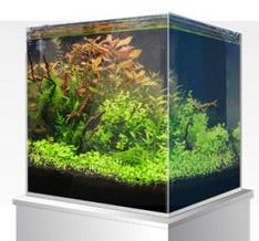 Amtra Nanoscaping aquarium