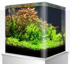 Amtra Nanotank aquarium