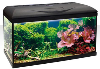 Amtra Basic aquarium