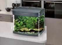 Onze aquaria Amtra