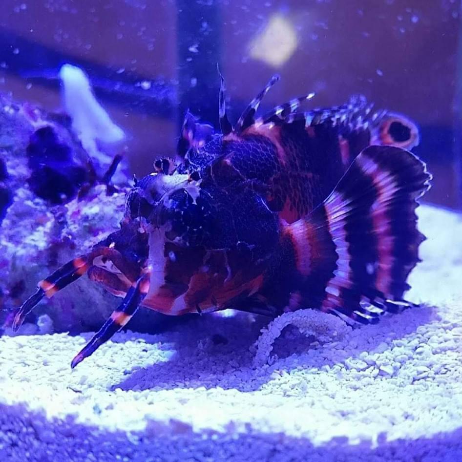 Mooiste vis 2019 - Aquarium neon