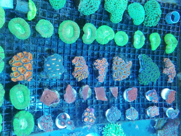 Koralen bij aquarium Neon