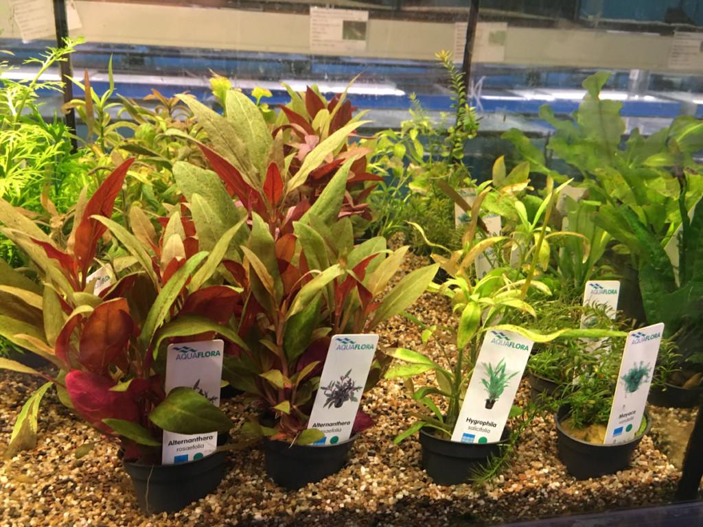 Plantjes bij aquarium Neon