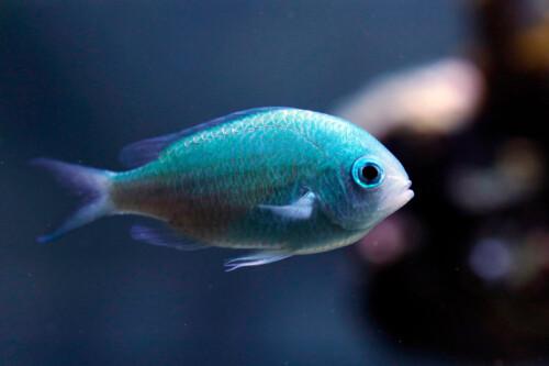 Zoutwatervissen